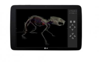 TABLET - ANATOMIA DO RATO - 3D